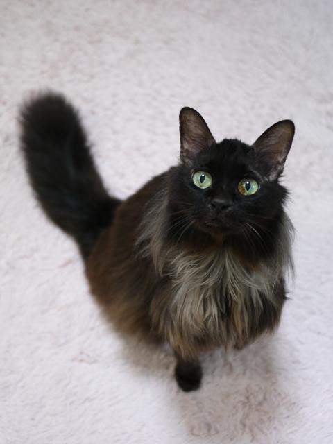 猫のお留守番 モコちゃん編。_a0143140_2157762.jpg