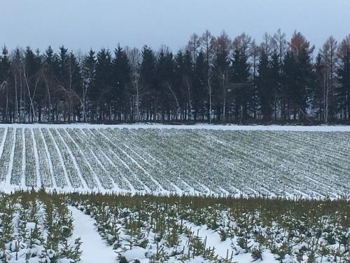 冬支度、、でももう冬_e0326953_20404203.jpg
