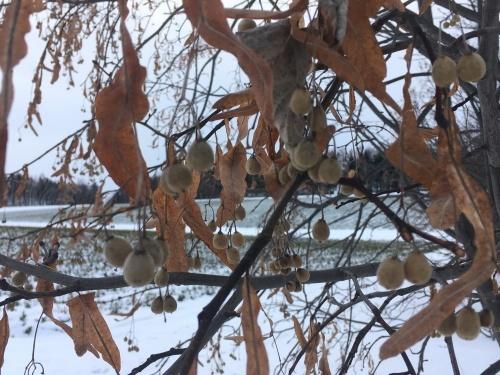 冬支度、、でももう冬_e0326953_20410745.jpg