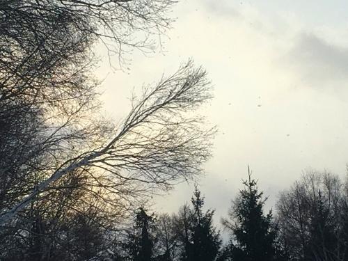冬支度、、でももう冬_e0326953_20412348.jpg