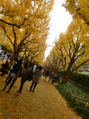 late autumn   神宮外苑  イチョウ並木とフォカッチャランチ_a0165160_17194000.jpg