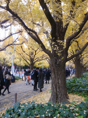 late autumn   神宮外苑  イチョウ並木とフォカッチャランチ_a0165160_17204484.jpg