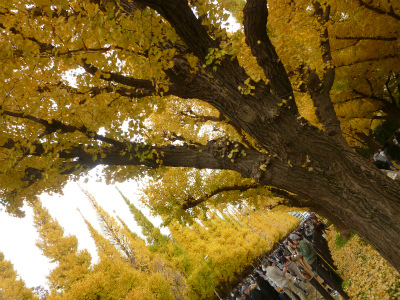 late autumn   神宮外苑  イチョウ並木とフォカッチャランチ_a0165160_17234423.jpg