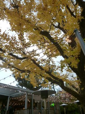late autumn   神宮外苑  イチョウ並木とフォカッチャランチ_a0165160_17334368.jpg