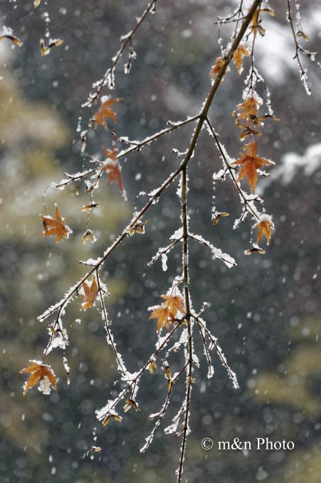 雪の残したモノ_e0321360_01331391.jpg