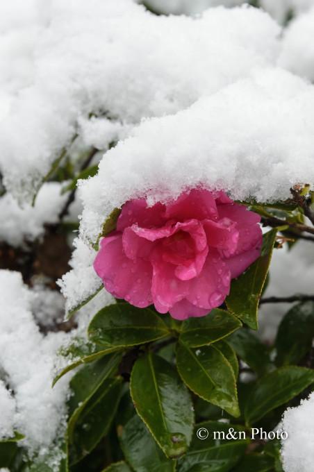 雪帽子_e0321360_19361025.jpg