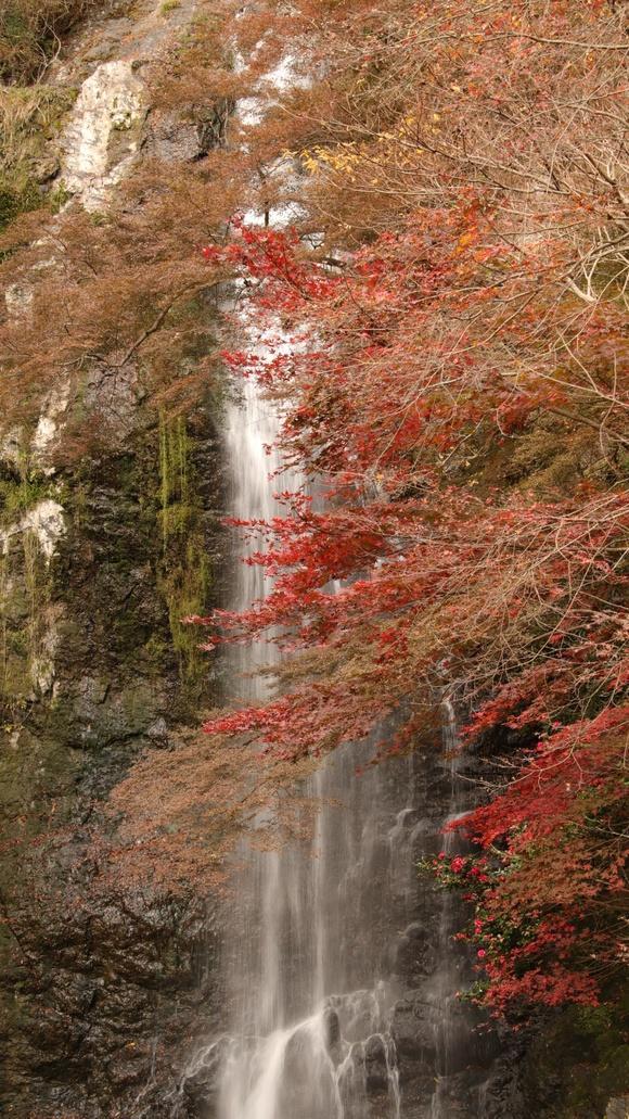 箕面自然 2016年11月箕面大滝。_d0202264_21331265.jpg