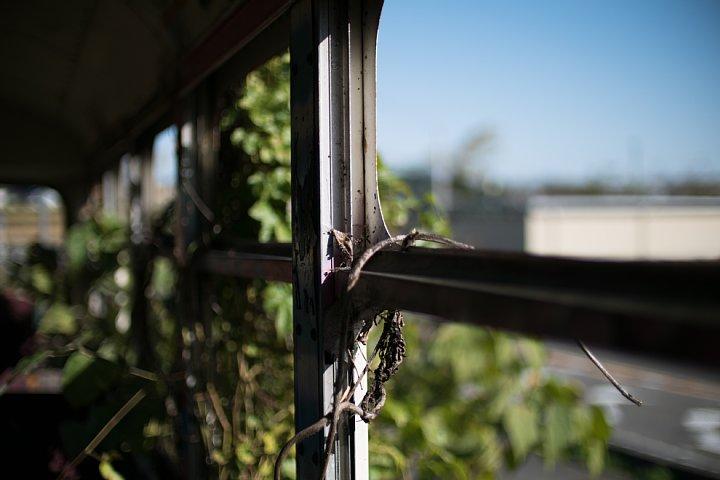 いつになくしぶとい蔦に閉口する廃バス_d0353489_2084051.jpg
