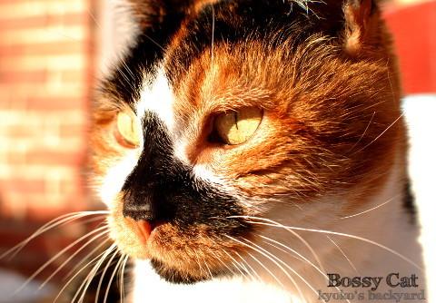 姉猫の一喝_b0253205_07074436.jpg