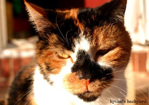 姉猫の一喝_b0253205_07092118.jpg