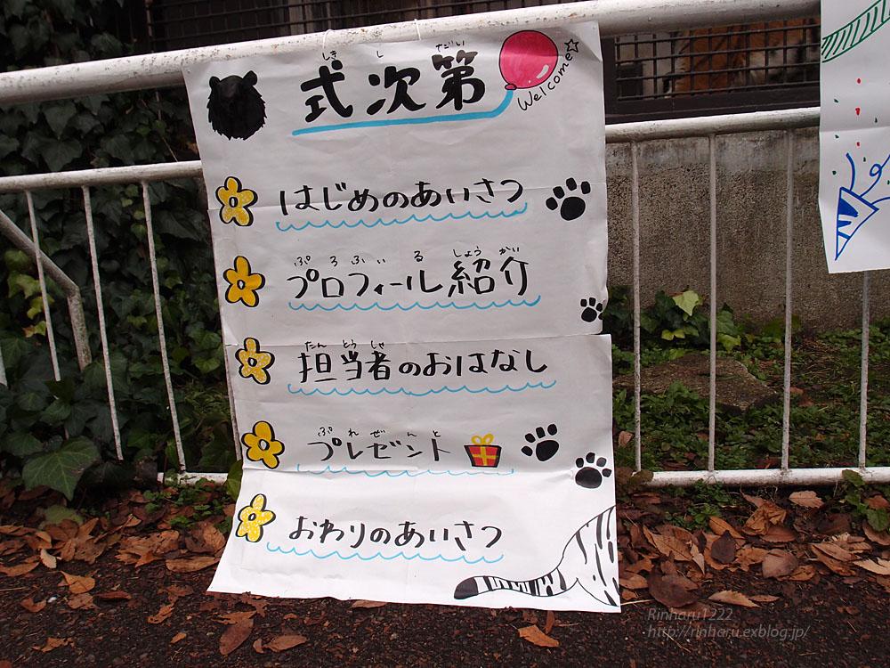 2016.11.27 宇都宮動物園☆アムールトラのアズサ姫歓迎の儀【Tiger】_f0250322_20102169.jpg