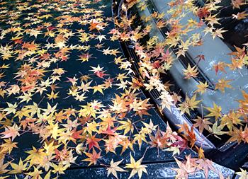 季節限定特別仕様車_e0103024_14242493.jpg
