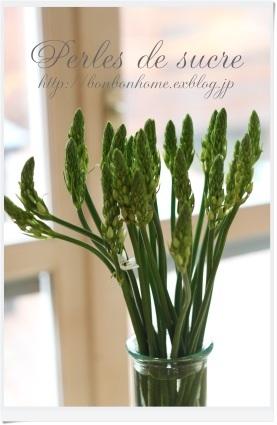 好きな花・・・そして 最近のはまりもの・・_f0199750_17083451.jpg