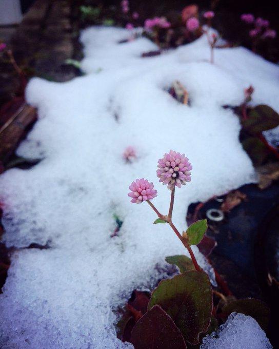 見上げて冬ゲート_e0071652_10333972.jpg