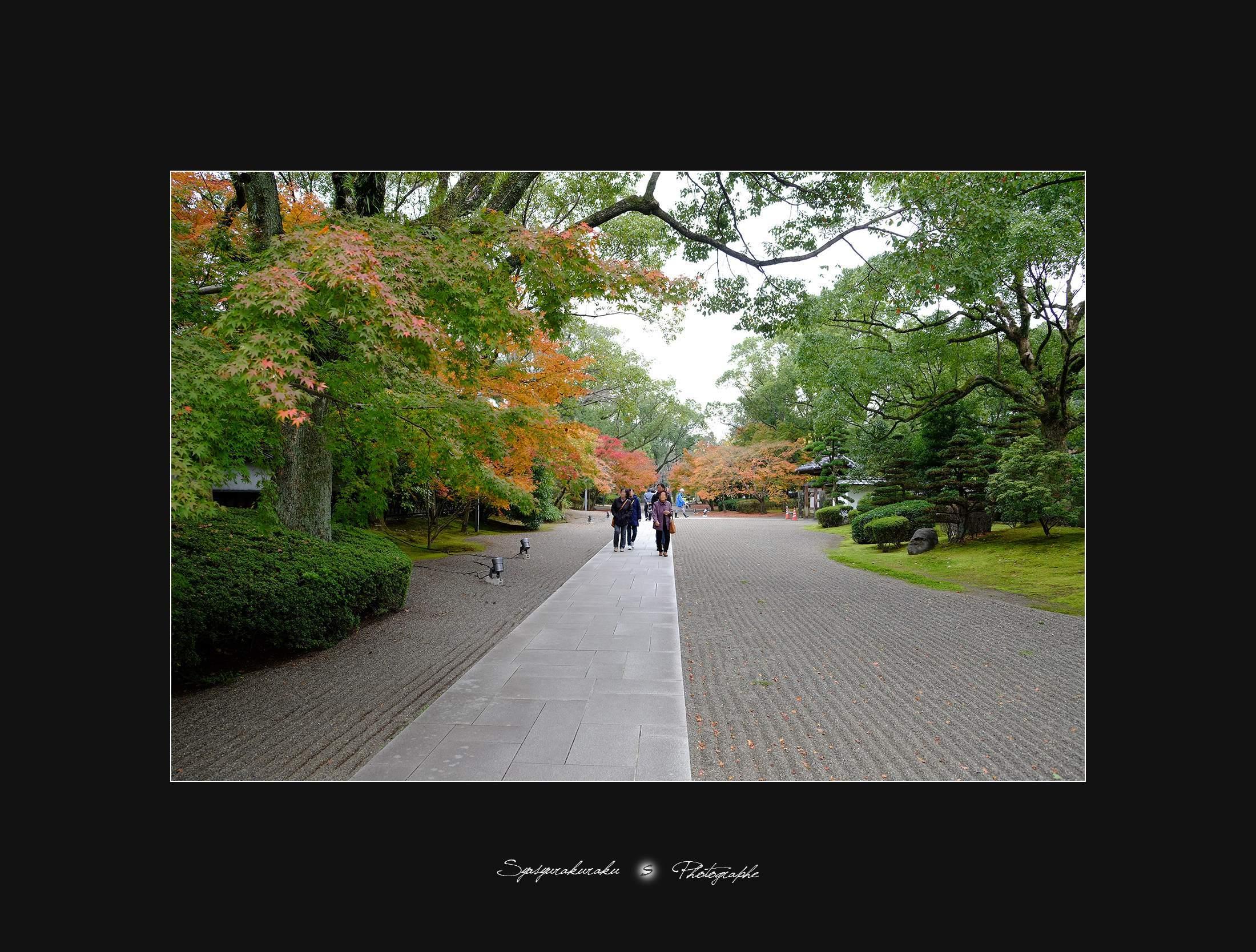 秋色 Ⅱ_c0253556_07305056.jpg