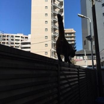 猫の目線_f0325471_10370690.jpg