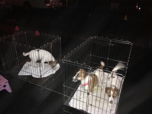 栃木2days dog show._c0120375_20105919.jpg
