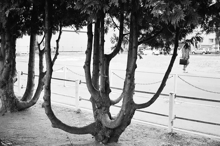 面白い樹形と厳しい光線情況の露出_c0182775_17255991.jpg