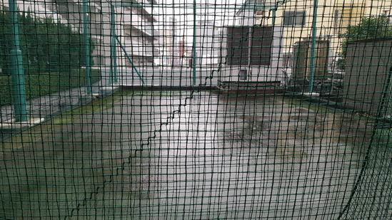 ず~っと雨_c0160277_162228.jpg