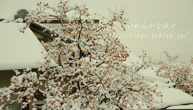 いたずら期 と 雪被害_a0158478_23344047.jpg