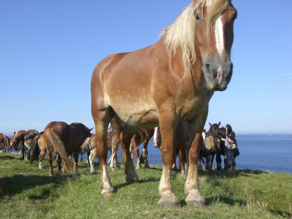 馬とヴィジュアル系と一~九戸は元々馬牧場&青森の内緒話_d0061678_19025981.jpg