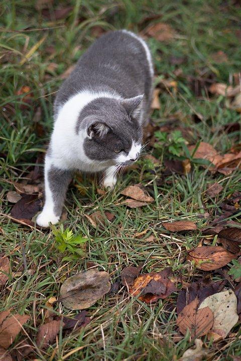 落葉の季節の桜猫たち_d0353489_1826121.jpg