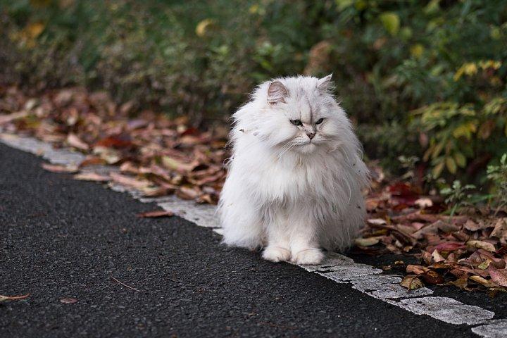 落葉の季節の桜猫たち_d0353489_18263675.jpg