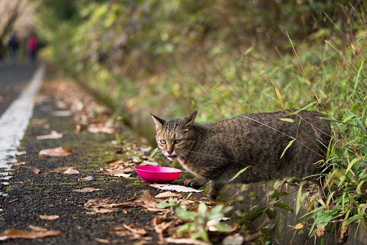 落葉の季節の桜猫たち_d0353489_18272569.jpg
