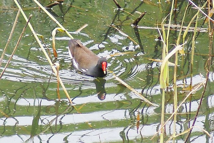 バン今日の野鳥blog:2010/05/28_e0362696_14540332.jpg