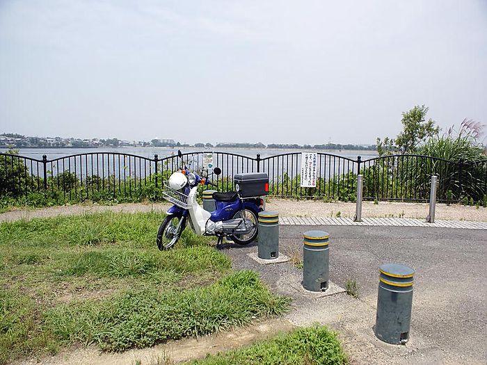 オオヨシキリ:今日の野鳥blog:2010/07/08_e0362696_14550201.jpg