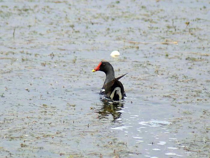 バン今日の野鳥blog:2010/07/13_e0362696_14550948.jpg