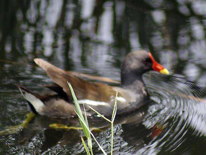 バン今日の野鳥blog:2010/07/13_e0362696_14550977.jpg