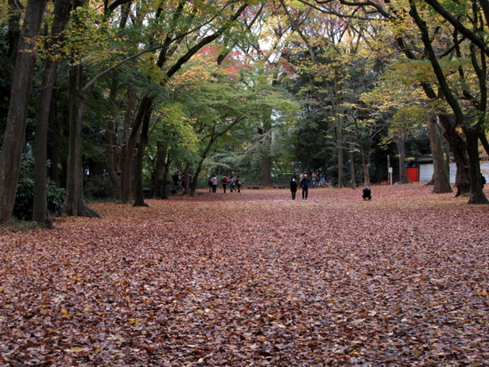紅葉探訪22 下鴨神社など_e0048413_19175730.jpg