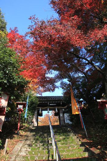 紅葉探訪22 下鴨神社など_e0048413_19183419.jpg