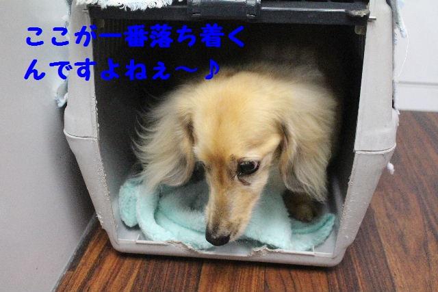 b0130018_18521618.jpg