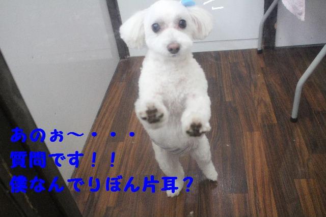 b0130018_18574771.jpg