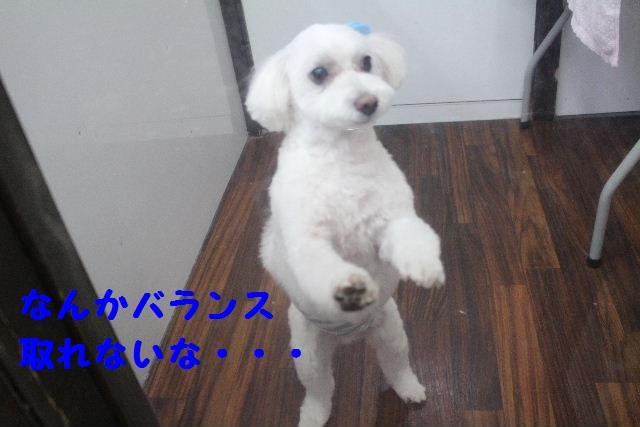 b0130018_18575579.jpg