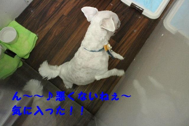 b0130018_1931120.jpg