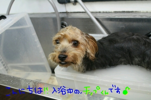 駅弁_b0130018_22393009.jpg