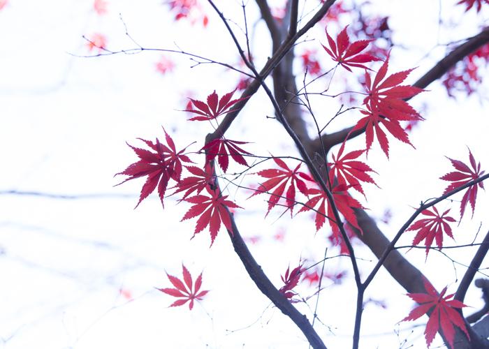 紅に雪解け水_e0238623_23092909.jpg