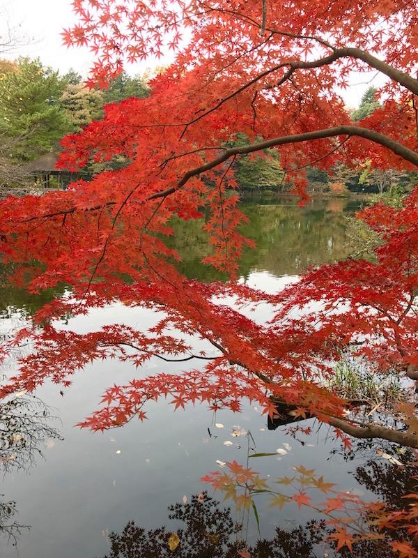 autumn leaves_b0172633_137340.jpg