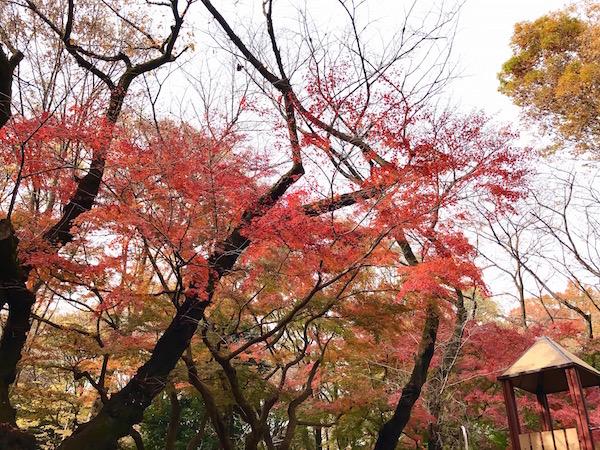 autumn leaves_b0172633_137631.jpg