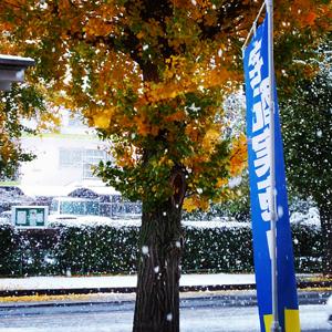 11月の雪_a0014840_20104348.jpg