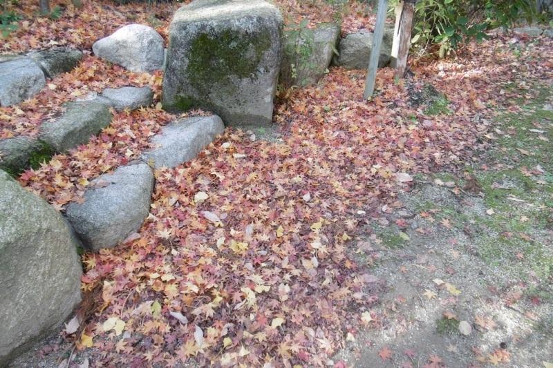 落ち葉の季節_f0205367_17003235.jpg