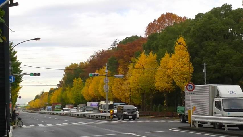 都内の紅葉も・・・・・・・。②。_d0062076_1519362.jpg