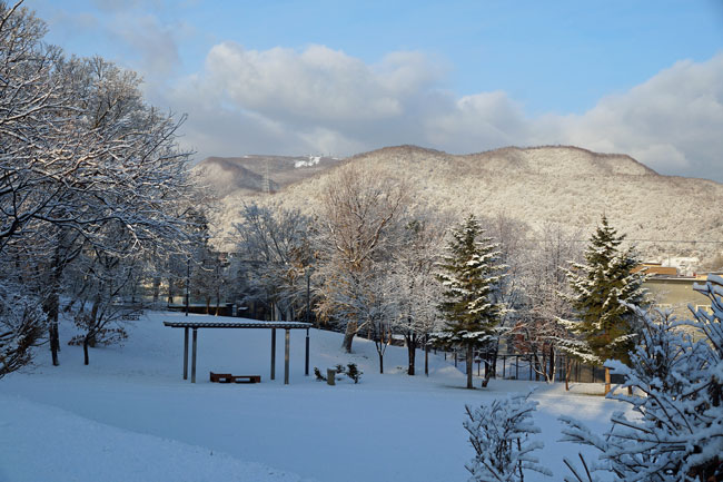 雪の朝_d0162994_9324460.jpg