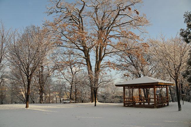 雪の朝_d0162994_9342766.jpg