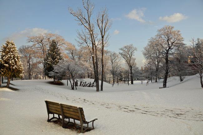 雪の朝_d0162994_935166.jpg