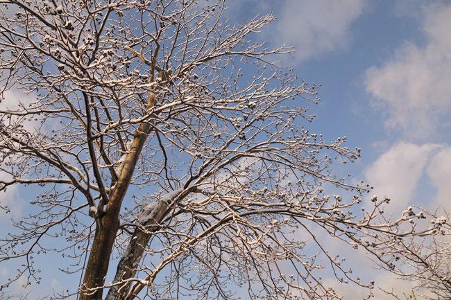雪の朝_d0162994_936658.jpg