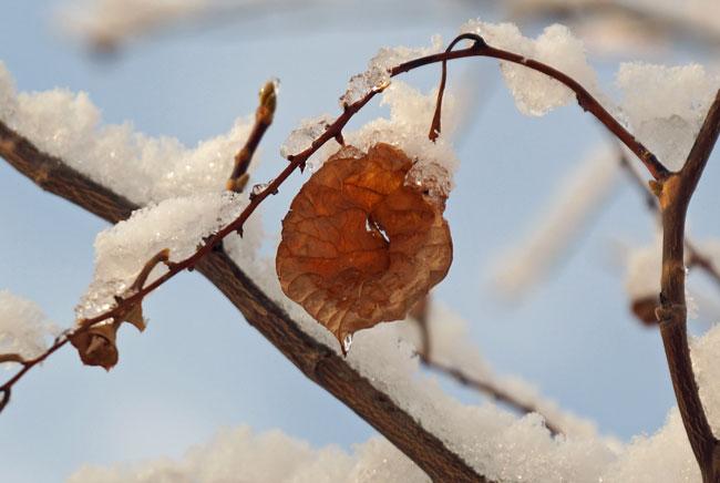 雪の朝_d0162994_9371116.jpg